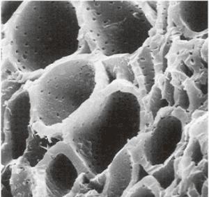 charbon actif vu au microscope